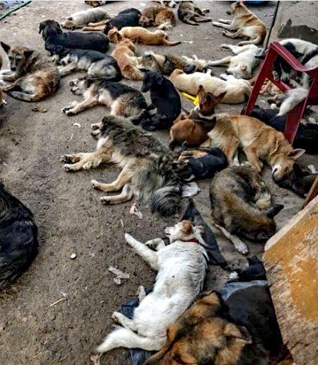 hambruna entre los perros