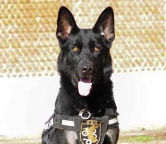 elko perro policía